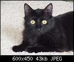 Klicke auf die Grafik für eine größere Ansicht  Name:Frieda5.jpg Hits:219 Größe:43,5 KB ID:10682