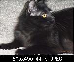 Klicke auf die Grafik für eine größere Ansicht  Name:Frieda2.jpg Hits:235 Größe:44,4 KB ID:10683