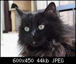 Klicke auf die Grafik für eine größere Ansicht  Name:Rieke2.jpg Hits:240 Größe:44,0 KB ID:10691