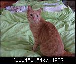 Klicke auf die Grafik für eine größere Ansicht  Name:Greta8.jpg Hits:218 Größe:54,1 KB ID:10696