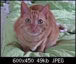 Klicke auf die Grafik für eine größere Ansicht  Name:Greta7.jpg Hits:216 Größe:48,8 KB ID:10697