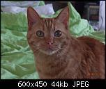 Klicke auf die Grafik für eine größere Ansicht  Name:Greta5.jpg Hits:212 Größe:43,6 KB ID:10698