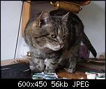 Klicke auf die Grafik für eine größere Ansicht  Name:Lisbeth4.jpg Hits:209 Größe:55,9 KB ID:10703
