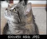 Klicke auf die Grafik für eine größere Ansicht  Name:Lisbeth1.jpg Hits:218 Größe:46,4 KB ID:10706