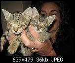 Klicke auf die Grafik für eine größere Ansicht  Name:k-Katzenbabies Juli 2016.jpg Hits:442 Größe:36,4 KB ID:12292
